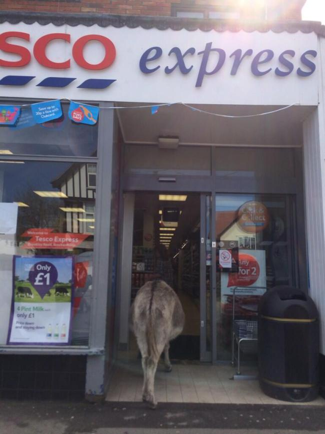 Donkey Casually Strolls Into Hampshire Tesco  donkey