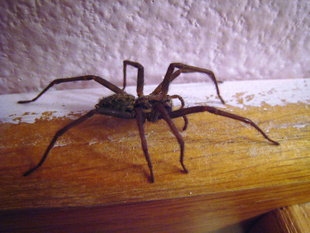 Woman Burns Down Home To Kill A Spider House spider side view 01