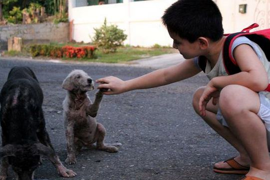 h7 Little Lad Rescues Dogs, Internet Responds In Amazing Way