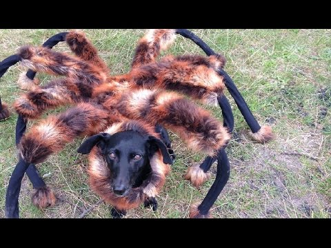 This Giant Mutant Spider Dog Prank Is Terrifying