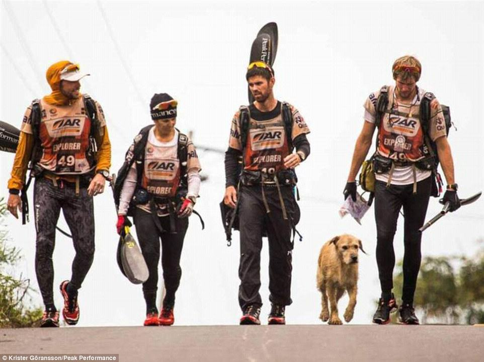 236A165700000578 0 image 6 1416751524088 Stray Dog Completes 400 Mile Race With Extreme Sports Team, Finds New Home