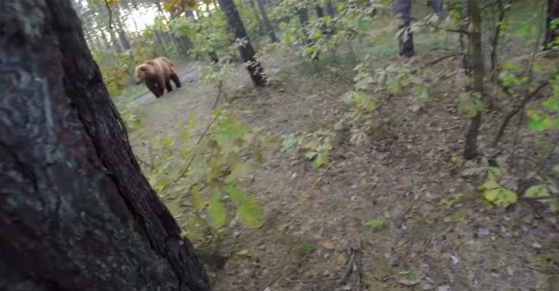 216 Video Of Of Man Running From Attacking Bear Goes Super Viral