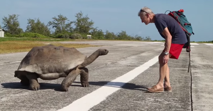 ewfds Guy Interrupts Giant Tortoises Banging, Then Gets Hilariously Chased