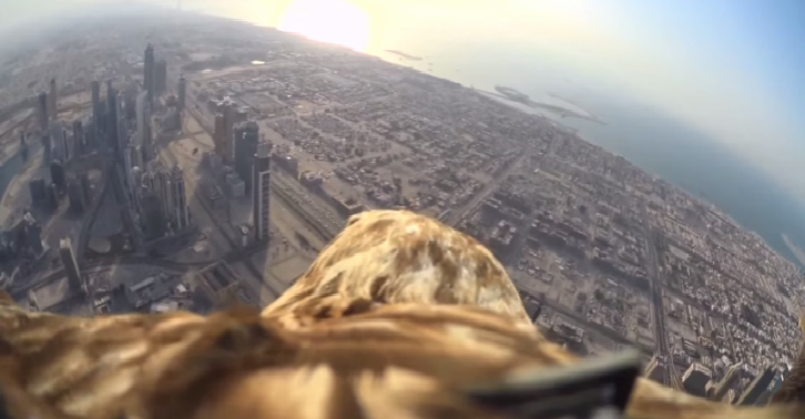iojug This POV Video From An Eagle As It Descends From The Worlds Tallest Building Is Incredible