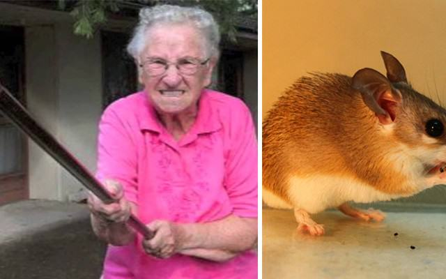 mouse Website Thumb 640x400 Grandma Kills Mouse With A Brush For Eating Her Mustard