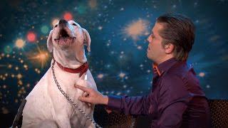 whitney Dog Sings Whitney Houston On TV Show, Is Better Than Most Humans