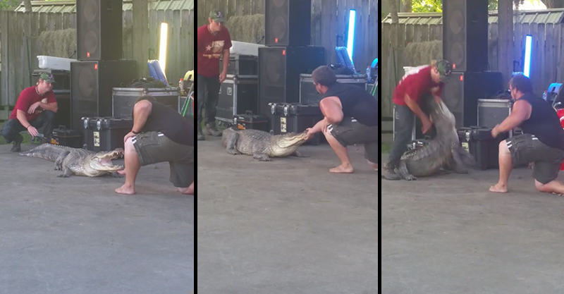 1103 Idiots Try To Tame Alligator For A Party Trick, Meet Karma