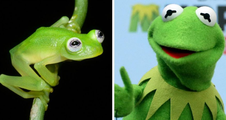 Screen Shot 2015 04 21 at 14.44.45 This New Species Of Frog Looks Exactly Like Kermit