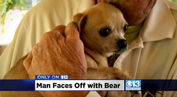 Screen Shot 2015 04 30 at 13.59.02 73 Year Old Man Punches Bear In The Face To Save His Dog
