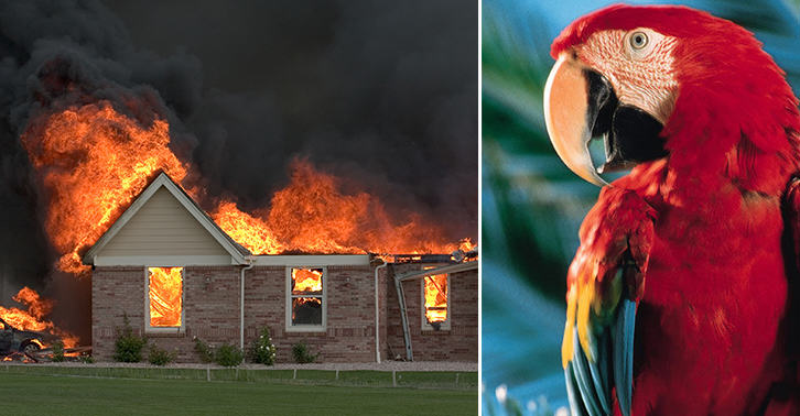 Parrots Rescued From A Burning Building After Shouting HELP! FIRE! Untitled 1 Recovered