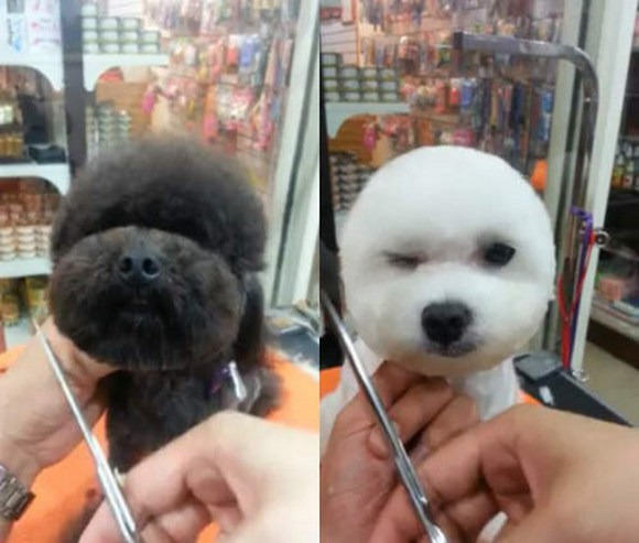Square Faced Dogs Are Now a Thing In Taiwan square2
