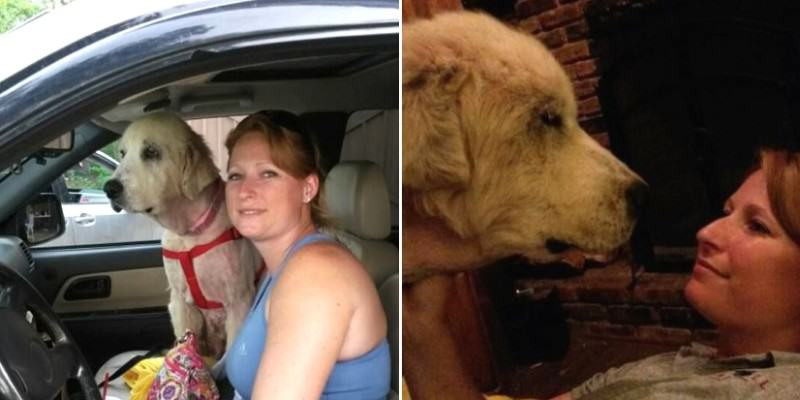 1117 Dog Gets Second Chance At Life After Owner Is Killed In Tornado
