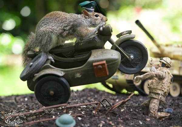115 This Guy Found A Way To Photograph Squirrels Lifting Weights