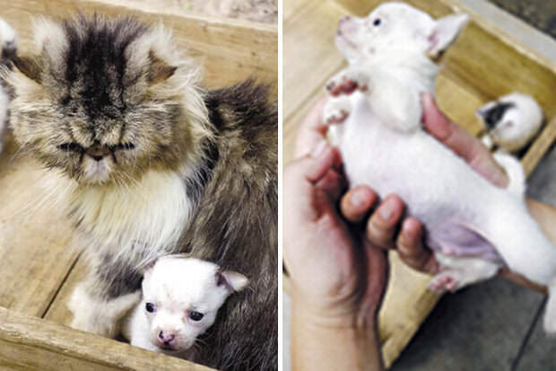 163 World First As Cat Gives Birth To A Dog