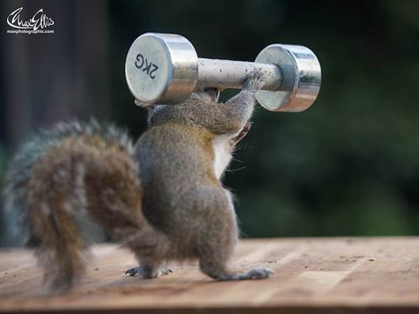 23 This Guy Found A Way To Photograph Squirrels Lifting Weights