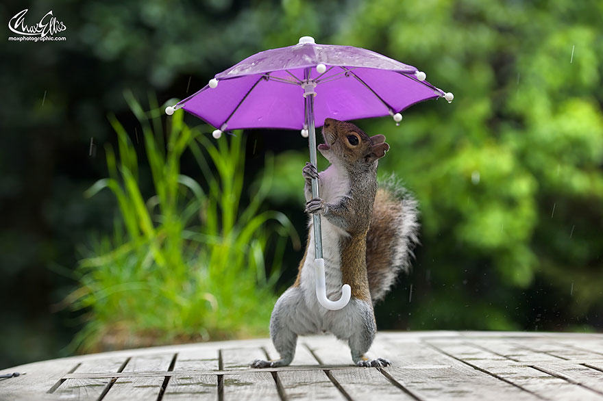 235 Photographer Gives Squirrel A Tiny Umbrella, Takes Best Photos EVER