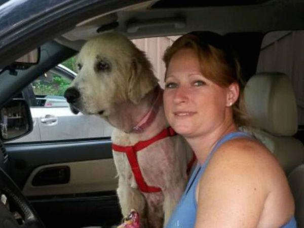 236 Dog Gets Second Chance At Life After Owner Is Killed In Tornado
