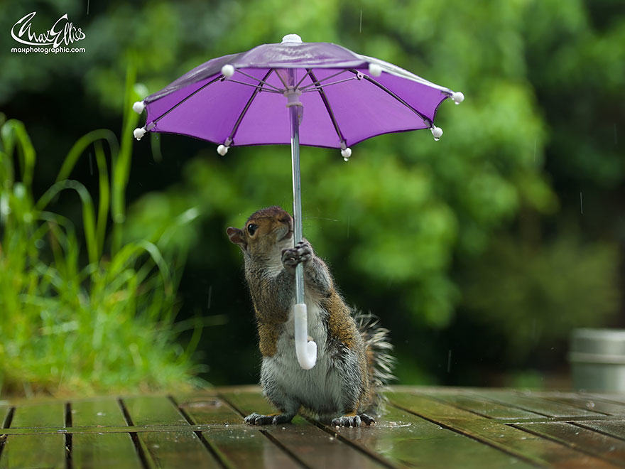 47 Photographer Gives Squirrel A Tiny Umbrella, Takes Best Photos EVER