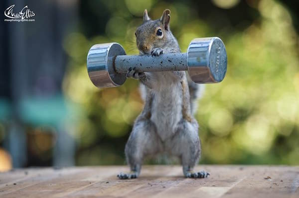 5 This Guy Found A Way To Photograph Squirrels Lifting Weights