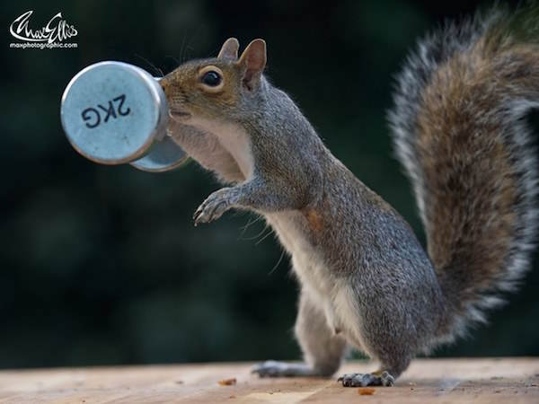 6 This Guy Found A Way To Photograph Squirrels Lifting Weights
