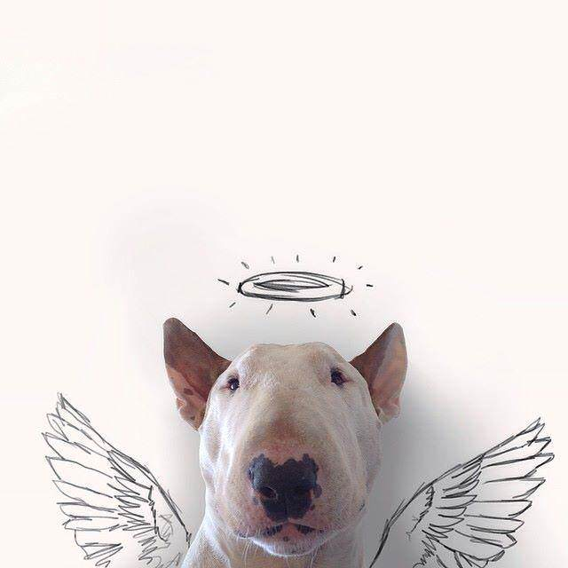 This Artist Uses His Bull Terrier To Create These Amazing Illustrations 61