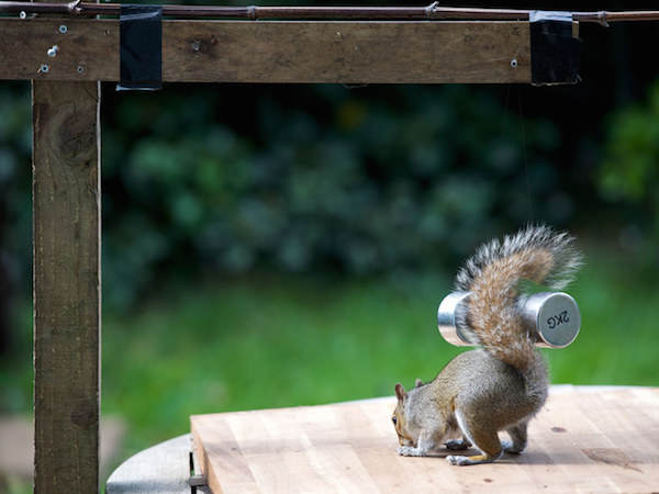 7 This Guy Found A Way To Photograph Squirrels Lifting Weights