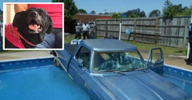 TN114 Dog Drives His Owners Car Into A Swimming Pool
