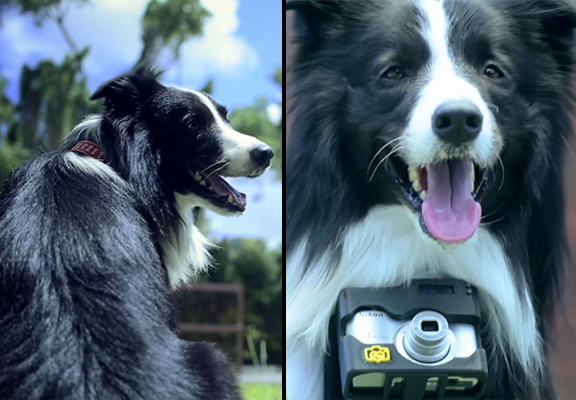 This Dog Takes Photos When It Gets Excited Via Heart Rate Monitor Camera dog photographer WEB