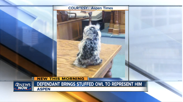 owl Man Shows Up In Court With Stuffed Owl As His Lawyer