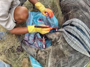 rhino2 Dye And Poison Could Well Stop Rhino Poachers