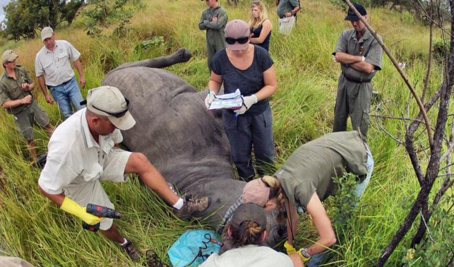 Dye And Poison Could Well Stop Rhino Poachers rhino7