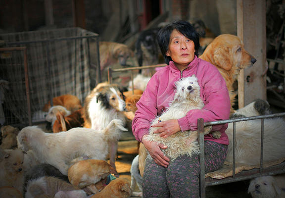 yang web Retired Teacher Spends Money On Stray Dogs, Buys Them Food, Saves Them From Yulin Festival