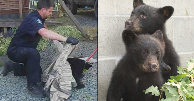 149 Conservation Officer Suspended For Refusing To Kill Bear Cubs Gets Ricky Gervais Backing