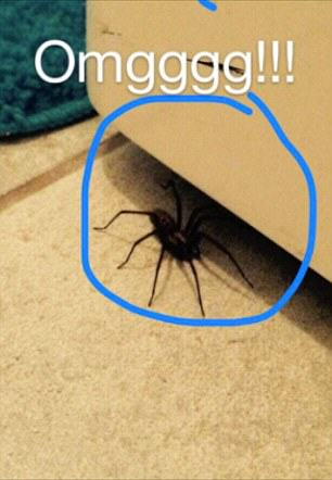 2A83B00C00000578 0 image a 40 1436872533046 This Girl Is Being Stalked By A Wolf Spider In Her Own Home
