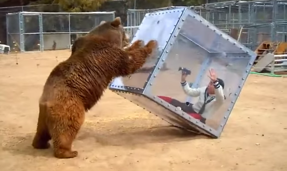 Screen Shot 2015 07 21 at 12.26.47 Japanese Gameshow Features A Bear And A Woman In A Cube, Obviously