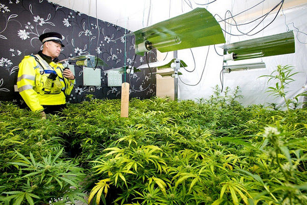 cannabis farm source west midlands police 400px Cannabis Prohibition Has Gone To Pot: Users Of Plant Given Green Light