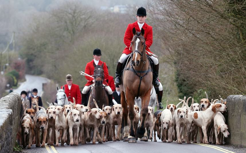 Fox Hunting Debate Delayed After SNP Forces David Cameron Rethink fox hunting 1