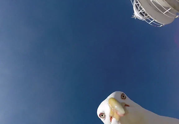 seagull web Seagull Steals GoPro Camera, Manages To Capture Amazing Footage Of Spanish Coast