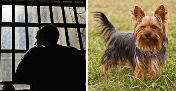 Man Jailed For Buying 'Sex Dog' Online And Filming It In Action With Woman UNILAD SMdog2