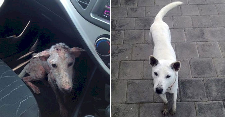 UNILAD TN183 This Desperate Dog Jumped Into Somebodys Car And Her Life Was Never The Same Again