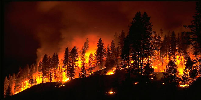 UNILAD california fire 25 Thousands Of Prisoners Are Fighting Wildfires In California For Less Than $2 A Day