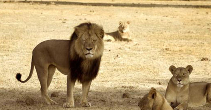 Cecil The Lion Killer Walter Palmer Has Finally Spoken Out UNILAD cecil422