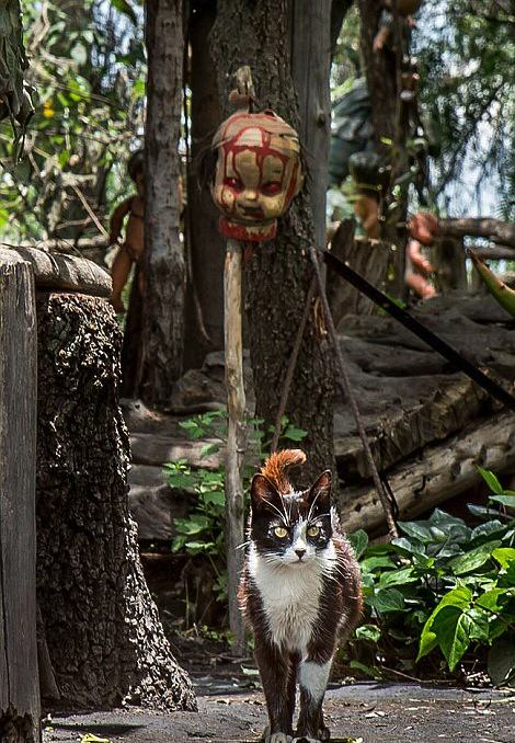 These Photos From Mexico's Haunted 'Island Of The Dolls' Are Extremely Creepy UNILAD h2xkTGspB