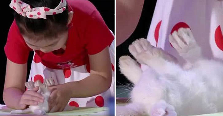 UNILAD hypnotism animals 26 Video Shows A Five Year Old Girl Hypnotising Animals With A Stroke Of Her Hand