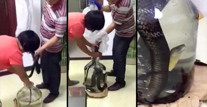 UNILAD snake drown 46 Video Shows Vile Humans Lowering Snake Into Glass Jar To Drown It