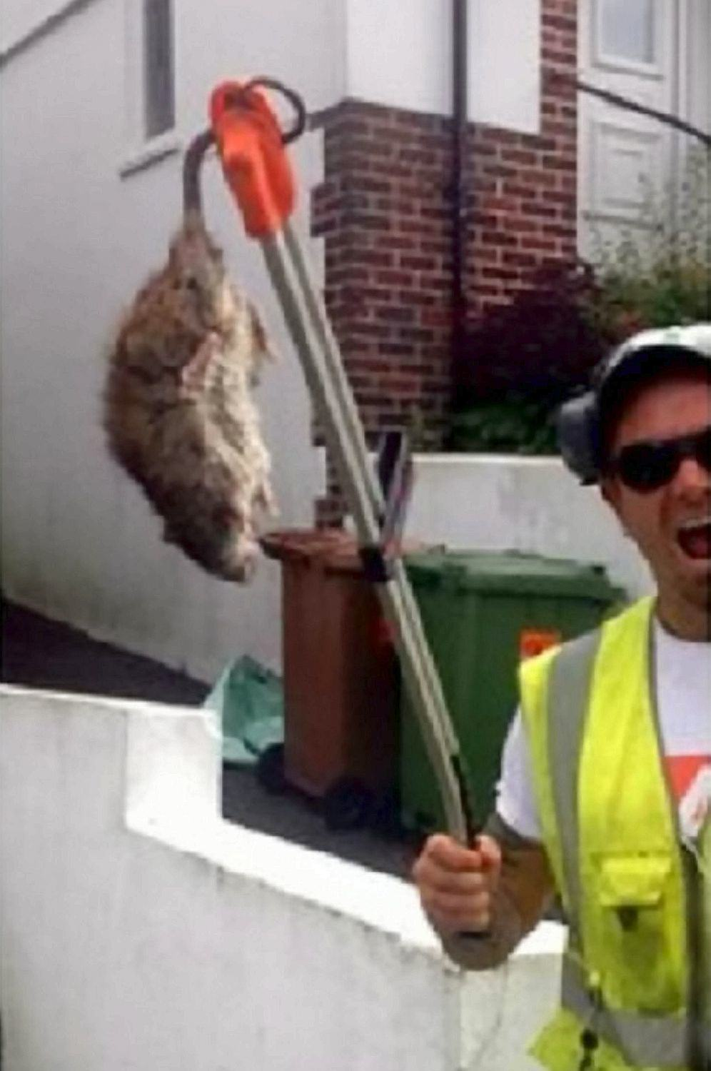 Ben LandricombeSWNS Rat The Size Of A Dog Chases Binman Down The Street In Plymouth