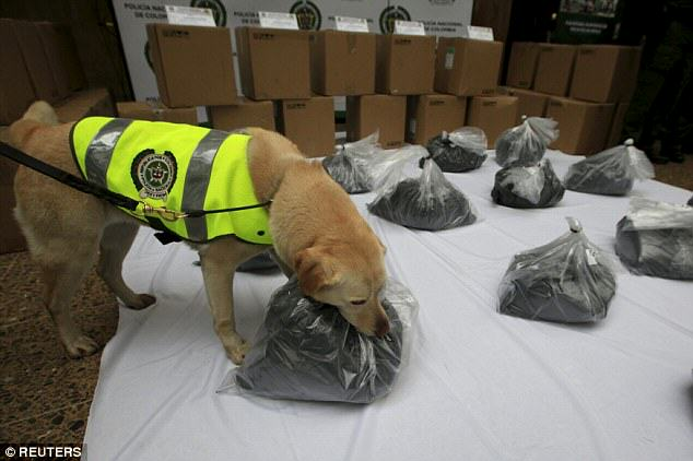 UNILAD 22 Sniffer Dog Finds A Metric Ton Of Cocaine On A Plane Heading To Mexico