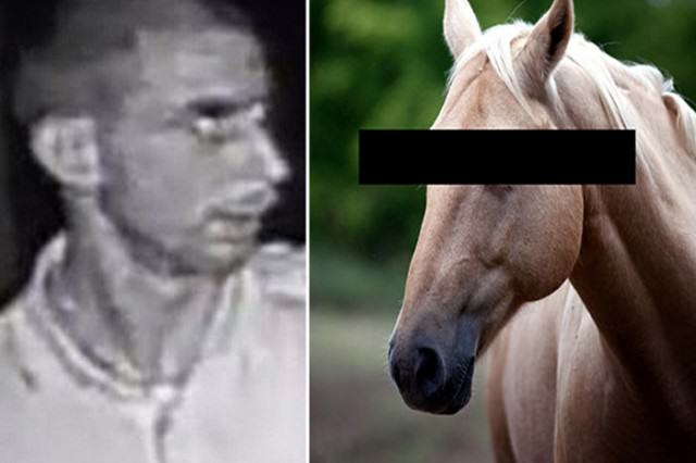 Married Father-Of-Three Pleads Guilty To Sexually Assaulting A Horse