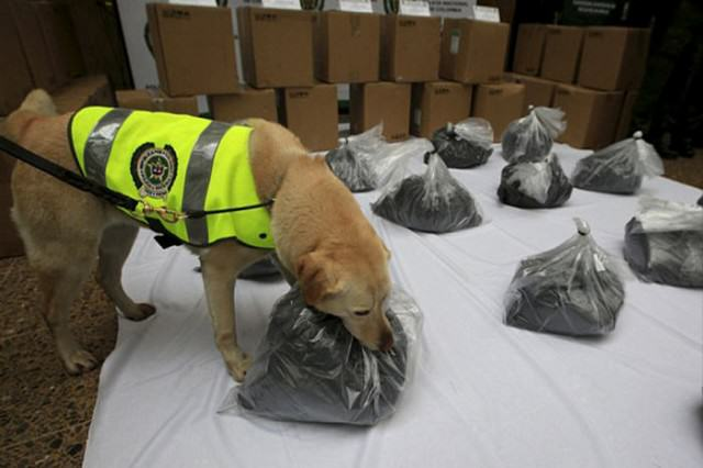 Sniffer Dog Finds A Metric Ton Of Cocaine On A Plane Heading To Mexico
