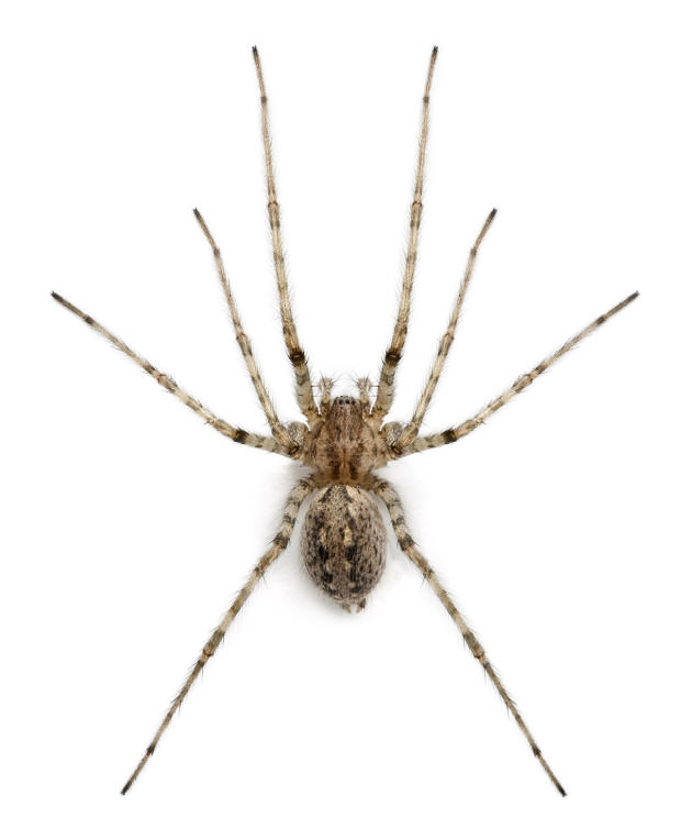 UNILAD caridnal gtty5 Ten Spiders Coming To Live With You This Autumn